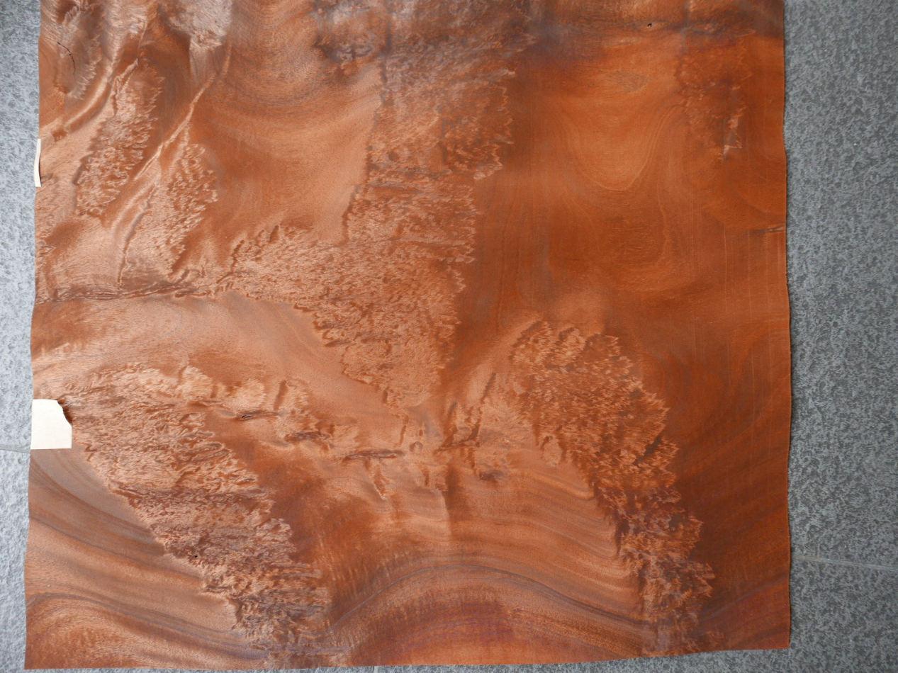 G682-4 Mahonie Wortel 58x63cm