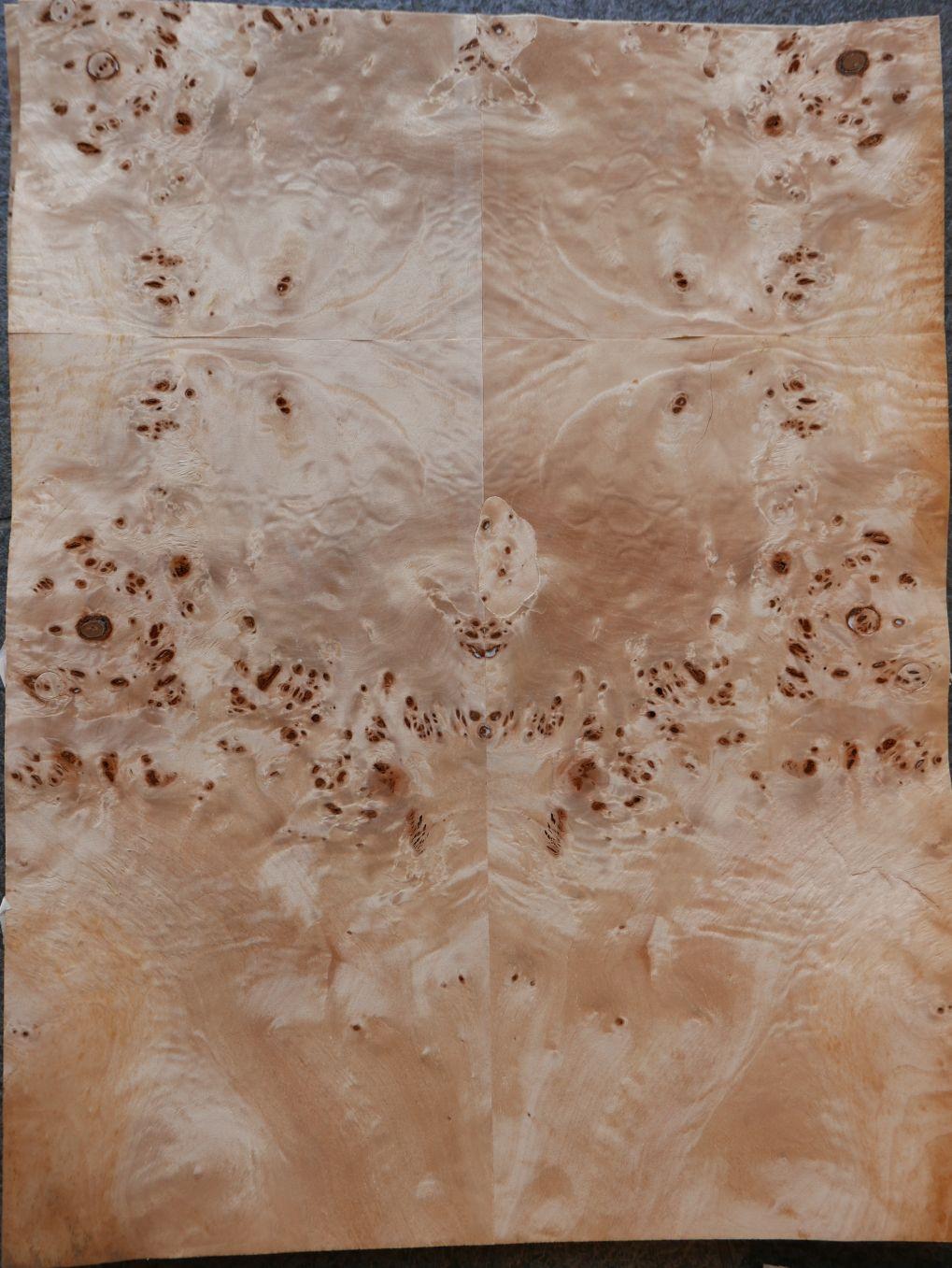 A050-4 Populier Wortel 35,5×46 10st
