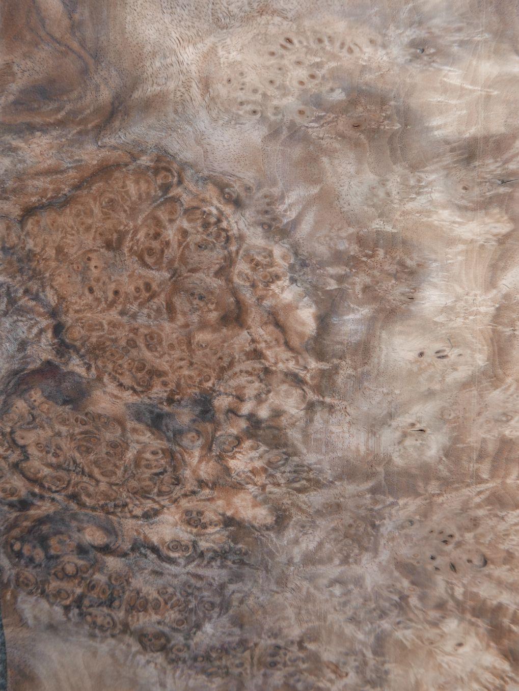 A0310-4 Noten Wortel 17,5-19×71,5cm 23st